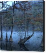 Cypress Awakening Canvas Print by Tamyra Ayles