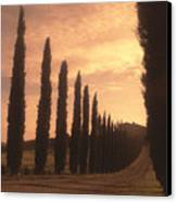Cypress Driveway Canvas Print by Andrew Soundarajan