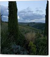 Cypress Trees Growing In The Rolling Canvas Print by Todd Gipstein