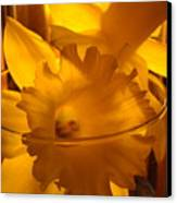 Daffodiil Flowers Evening Glow 9 Contemporary Modern Art Print Giclee Canvas Print