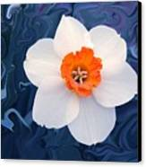 Daffodill In Blue Canvas Print