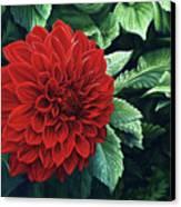 Dahlia Dawn Canvas Print