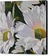 Daisy Bunch Canvas Print