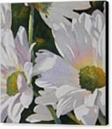 Daisy Bunch Canvas Print by Judy Mercer