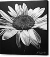 Daisy I Canvas Print by Marna Edwards Flavell