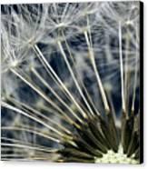 Dandelion Seed Head Canvas Print by Ryan Kelly