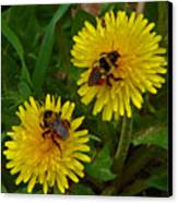 Dandelions And Bees Canvas Print