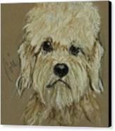 Dandie Canvas Print