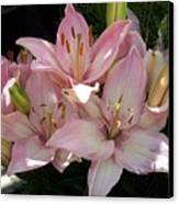 Dappled Pink Lillies Canvas Print