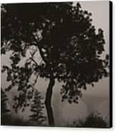 Dark Elm By River Canvas Print