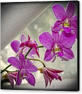Dark Pink Orchids All In A Row Canvas Print by Eva Thomas