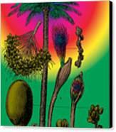 Date Palm Canvas Print by Eric Edelman