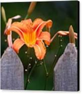 Day Lilly Fenced In Canvas Print