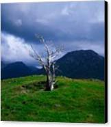 Dead Tree, Connemara, Co Galway, Ireland Canvas Print by The Irish Image Collection