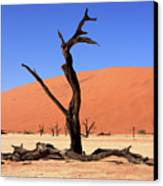 Dead Vlei Tree  Canvas Print by Aidan Moran