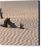 Death Valley Morning Canvas Print by Sandra Bronstein