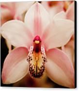 Deep Cut Orchid Canvas Print