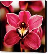 Deep Cut Orchid Society 15th Annual Orchid Show Canvas Print by Dan Pfeffer