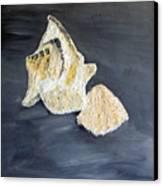Deep Ocean Seashells Canvas Print by Leslye Miller