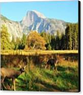 Deer And Half Dome Canvas Print by Sandy L. Kirkner