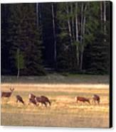 Deer At Kaibab Meadows Canvas Print