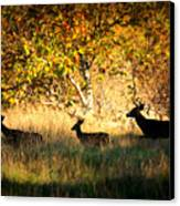 Deer Family In Sycamore Park Canvas Print by Carol Groenen