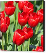 Delicious Tulips Canvas Print