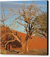 Desert Beauty Canvas Print