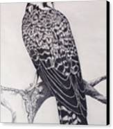 Desert Hawk II Canvas Print by Suzette Kallen