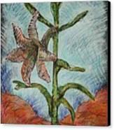 Desert Lily Canvas Print