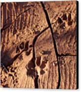 Desert Paw Prints Canvas Print