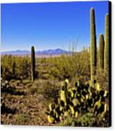 Desert Spring Canvas Print by Chad Dutson