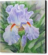 Dew On Light Blue Iris. Canvas Print
