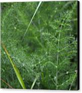Dew On The Ferns Canvas Print