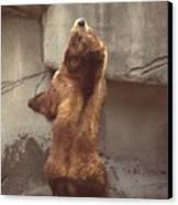 Disco Bear  52891-1 Canvas Print