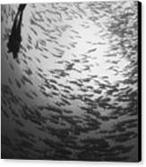 Diver And A Large School Of Bigeye Canvas Print by Steve Jones