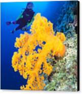 Diving, Australia Canvas Print by Dave Fleetham - Printscapes