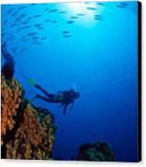 Diving Scene Canvas Print