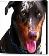 Doberman Australian Shepherd Cattle Dog  Canvas Print