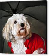 Dog Under Umbrella Canvas Print by Elena Elisseeva