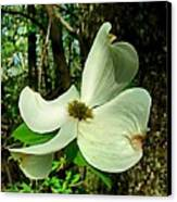Dogwood Blossom II Canvas Print by Julie Dant
