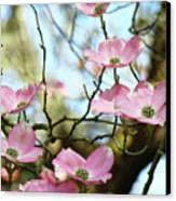 Dogwood Flowers Pink Dogwood Tree Landscape 9 Giclee Art Prints Baslee Troutman Canvas Print