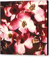 Dogwood Harmony Canvas Print