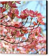 Dogwood Tree Landscape Pink Dogwood Flowers Art Canvas Print