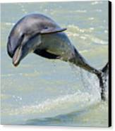 Dolphin Canvas Print by Wade Aiken
