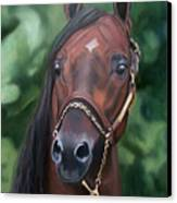 Dont Worry Saddlebred Sire Canvas Print