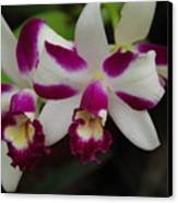 Double Orchid Canvas Print