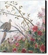 Dove And Roses Canvas Print