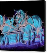 Draft Horses Canvas Print