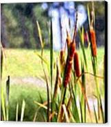 Dragon Fly And Cattails In Watercolor Canvas Print by Gary Adkins